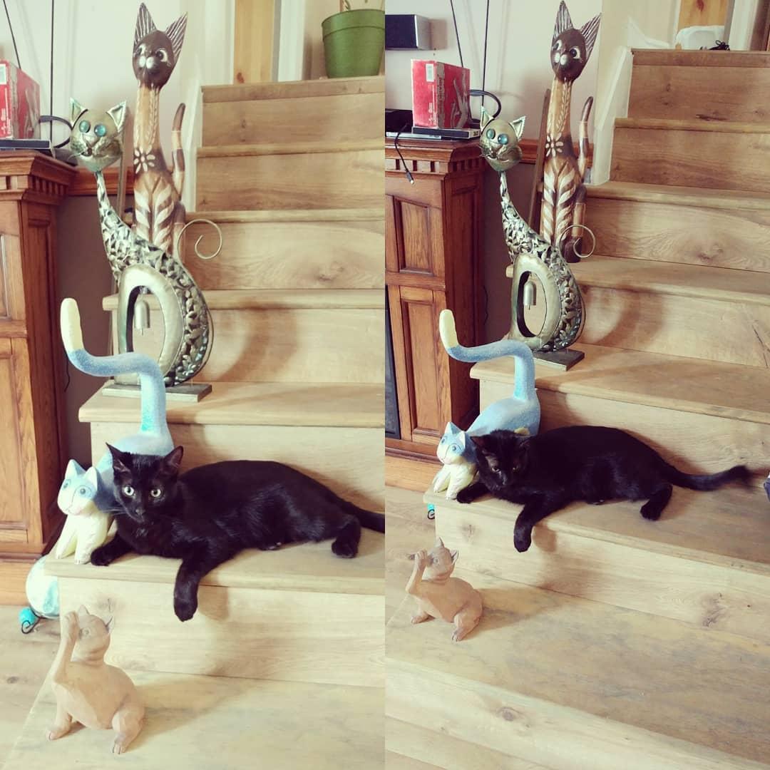 Quando você pensa que adorna a casa! #housedecoration #whenyouthinkyouarecute #cat ...