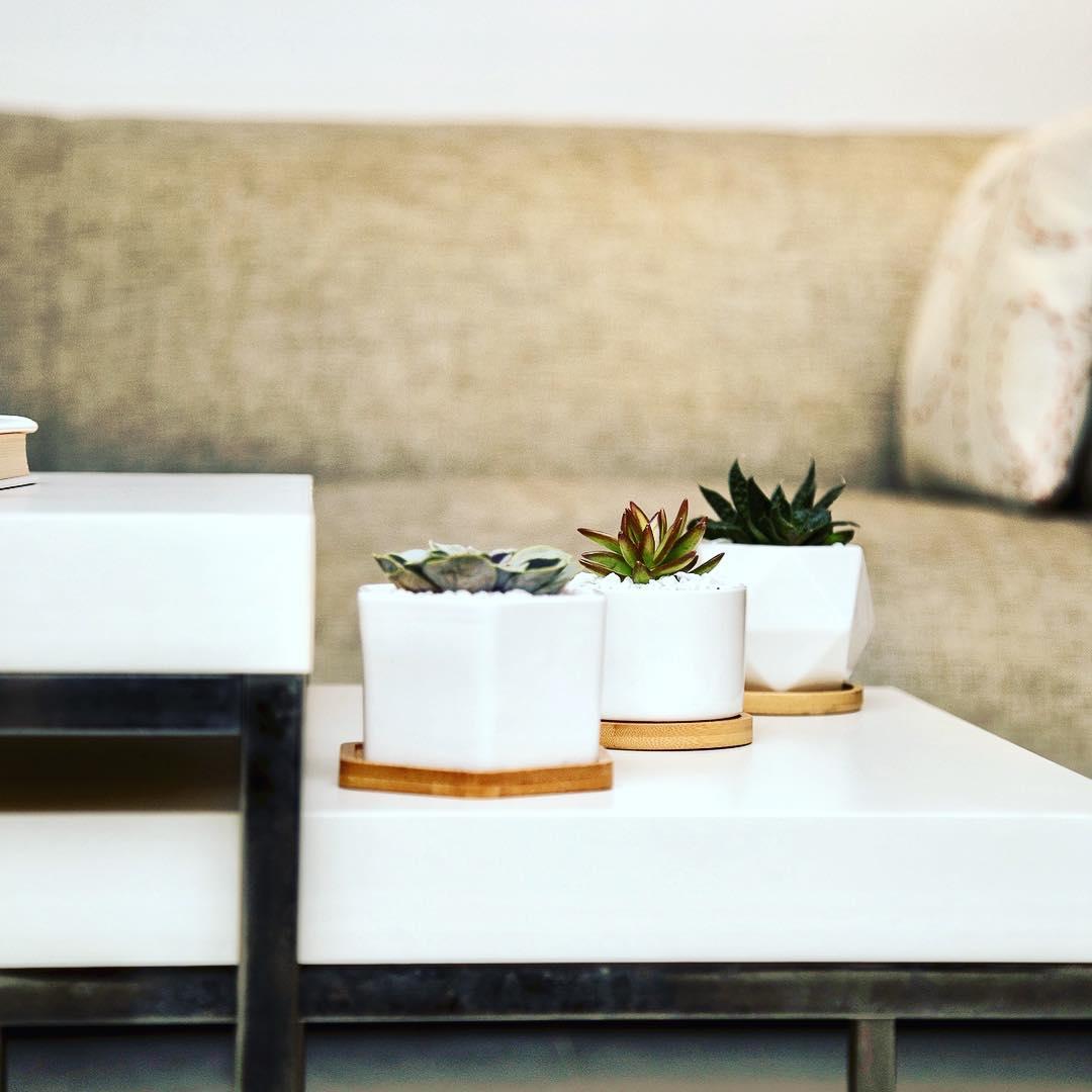 Dê um toque caloroso à sua casa é muito fácil com uma planta! E se sua planta é ...