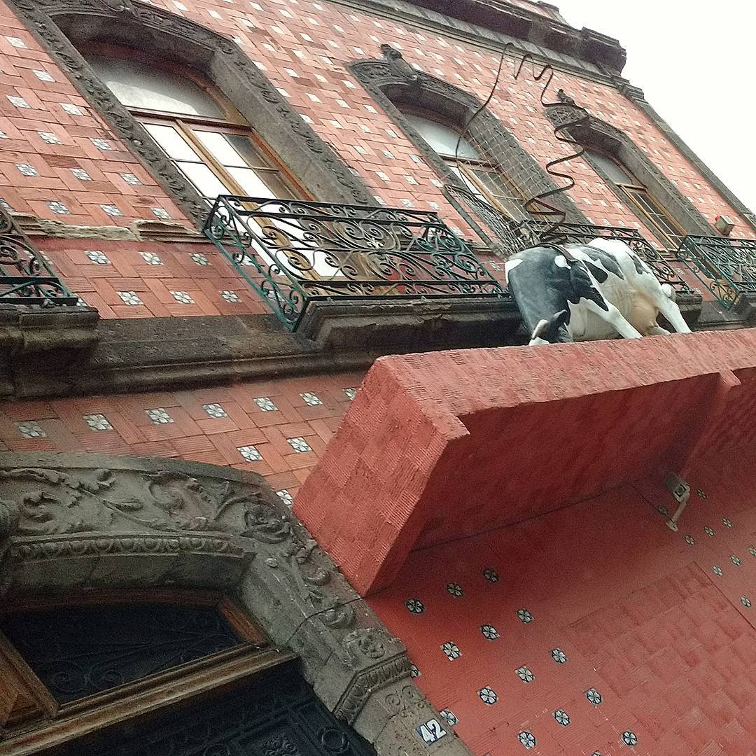 O que uma vaca voadora come no terraço? #curiosidades # México #decor ...