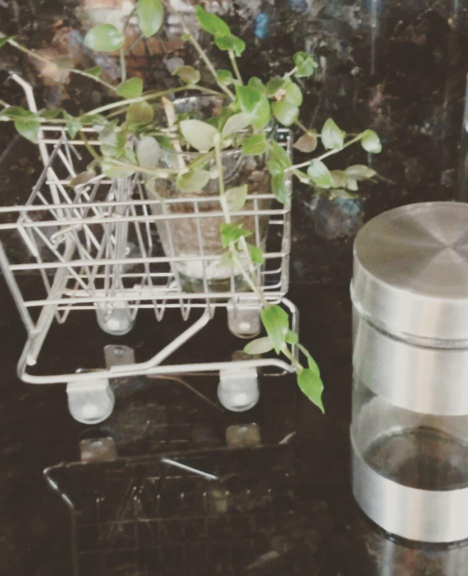 Detalhes para sua cozinha #organizaciondetuhogar #ordenentuhogar #homedecor #decor ...