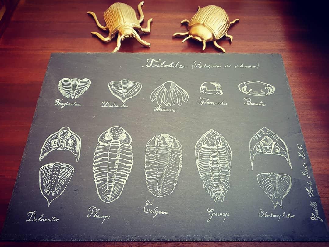 Desenho de trilobites no quadro negro ... #trilobites #pizarra #draw #dessin #draw ...
