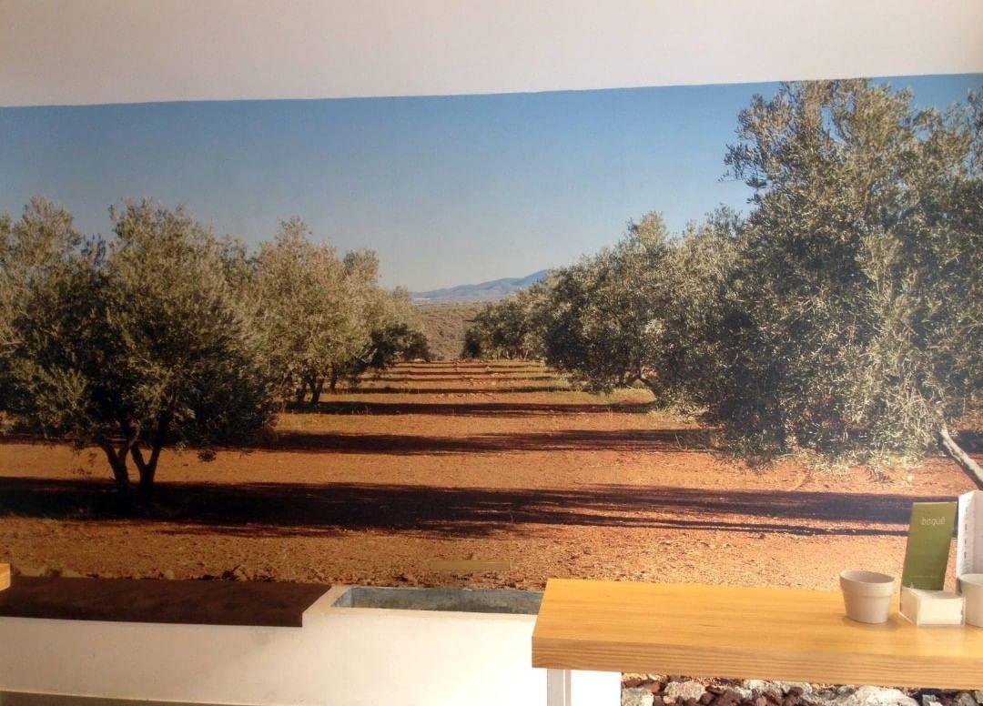 Uma janela direta para uma bela terra de oliveiras. Neste bar-restaurante de ...