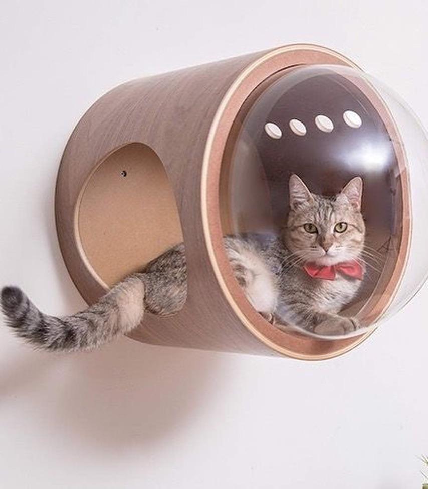 Para amantes do gato Mais informaçõesAs pessoas também amam estas ideias